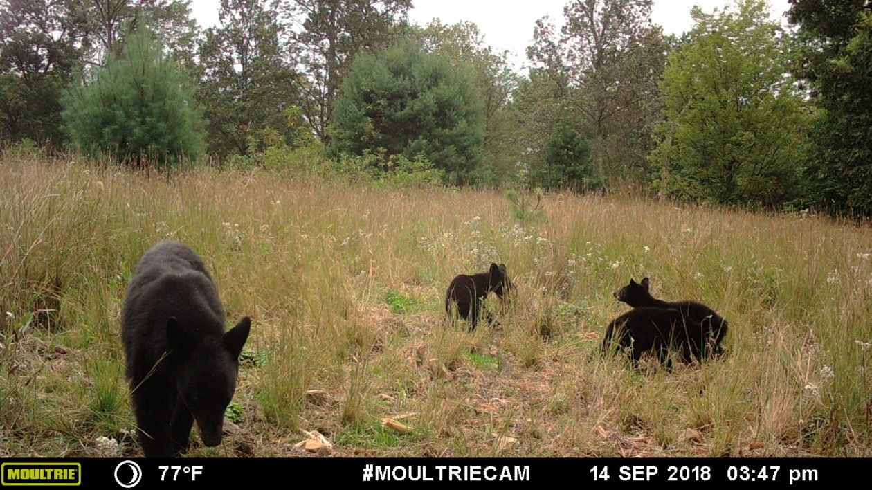 Children Can Benefit From Trail Cameras