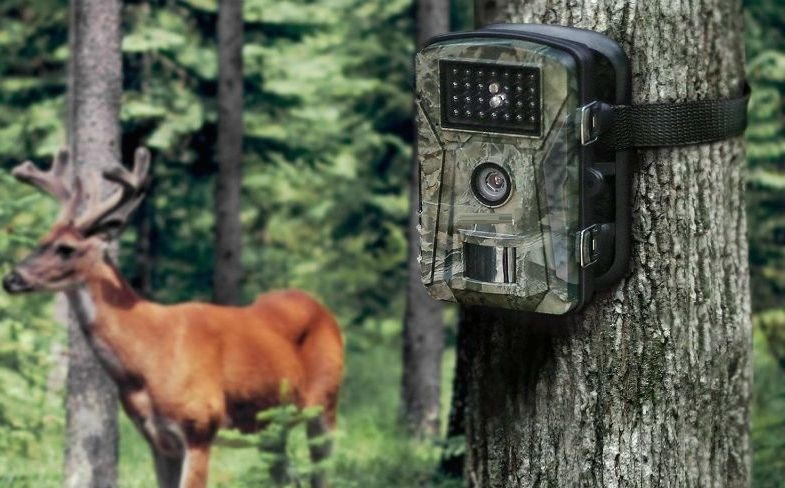 Things Must Know Before Buy Your Trail Camera