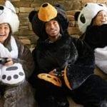 Bear Sleeping Bags Buying Tips