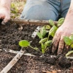 Tips on Square Foot Gardening