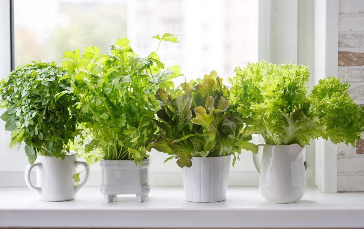 Start Herb Gardening