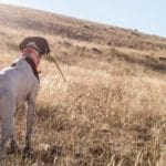 4 Ways To Make Your Dream Hunt A Reality