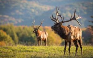 Where To Hunt Elk