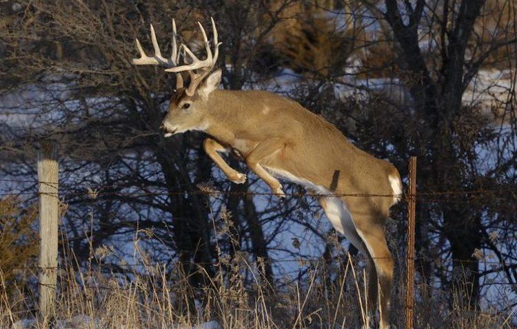 Bowhunting Post Rut Bucks