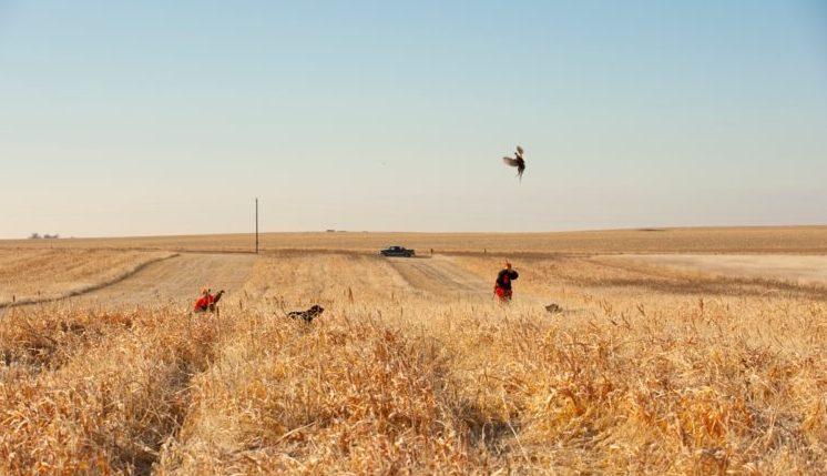 pheasant-hunt-season