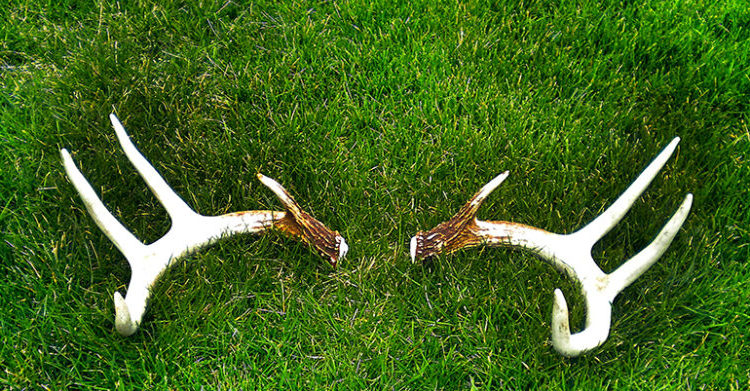 seven-shed-hunting-tips
